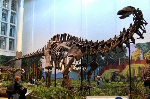 Apatosaurus louisae at the Carnegie Museum via Wikimedia Commons