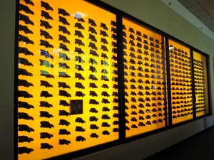 A display of 400 dire wolf skulls at the Page museum Credit: Erin Podolak